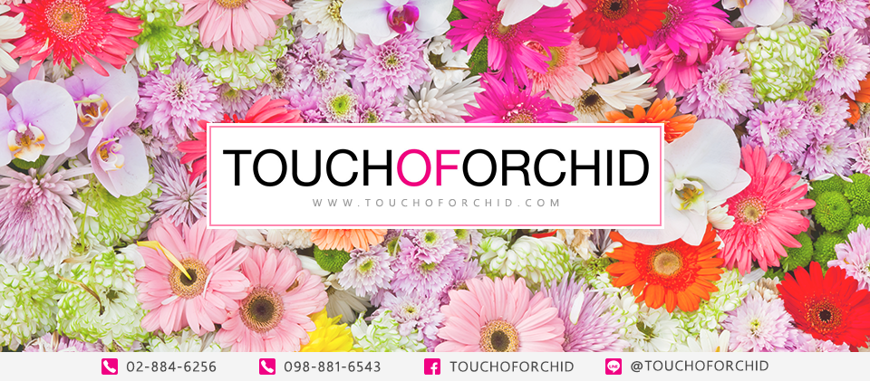 TOUCH OF ORCHID