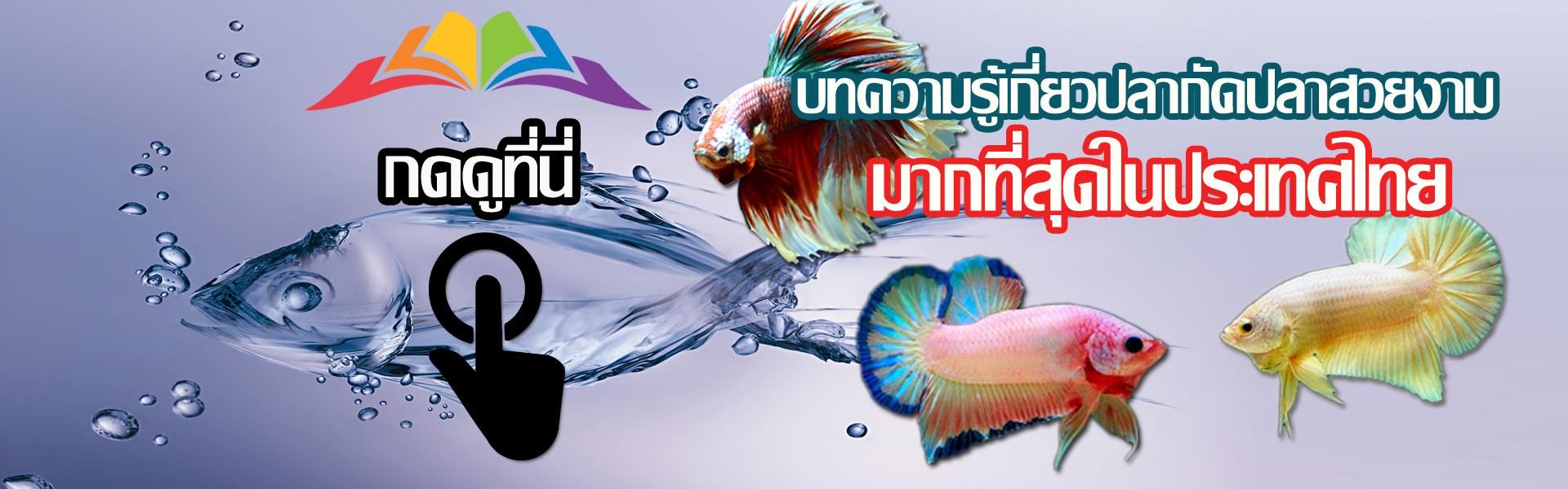 บทความน่ารู้สำหรับปลากัดและปลาสวยงาม