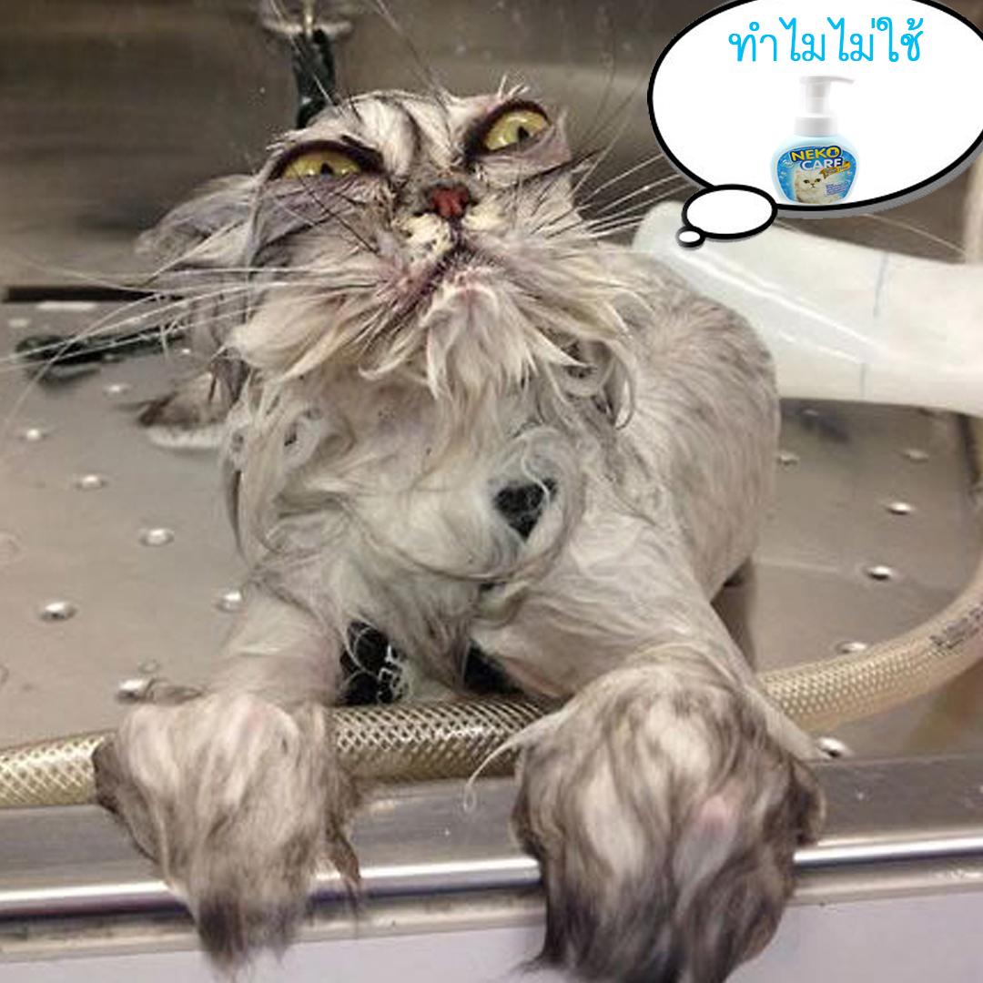 แมวไม่ชอบอาบน้ำ