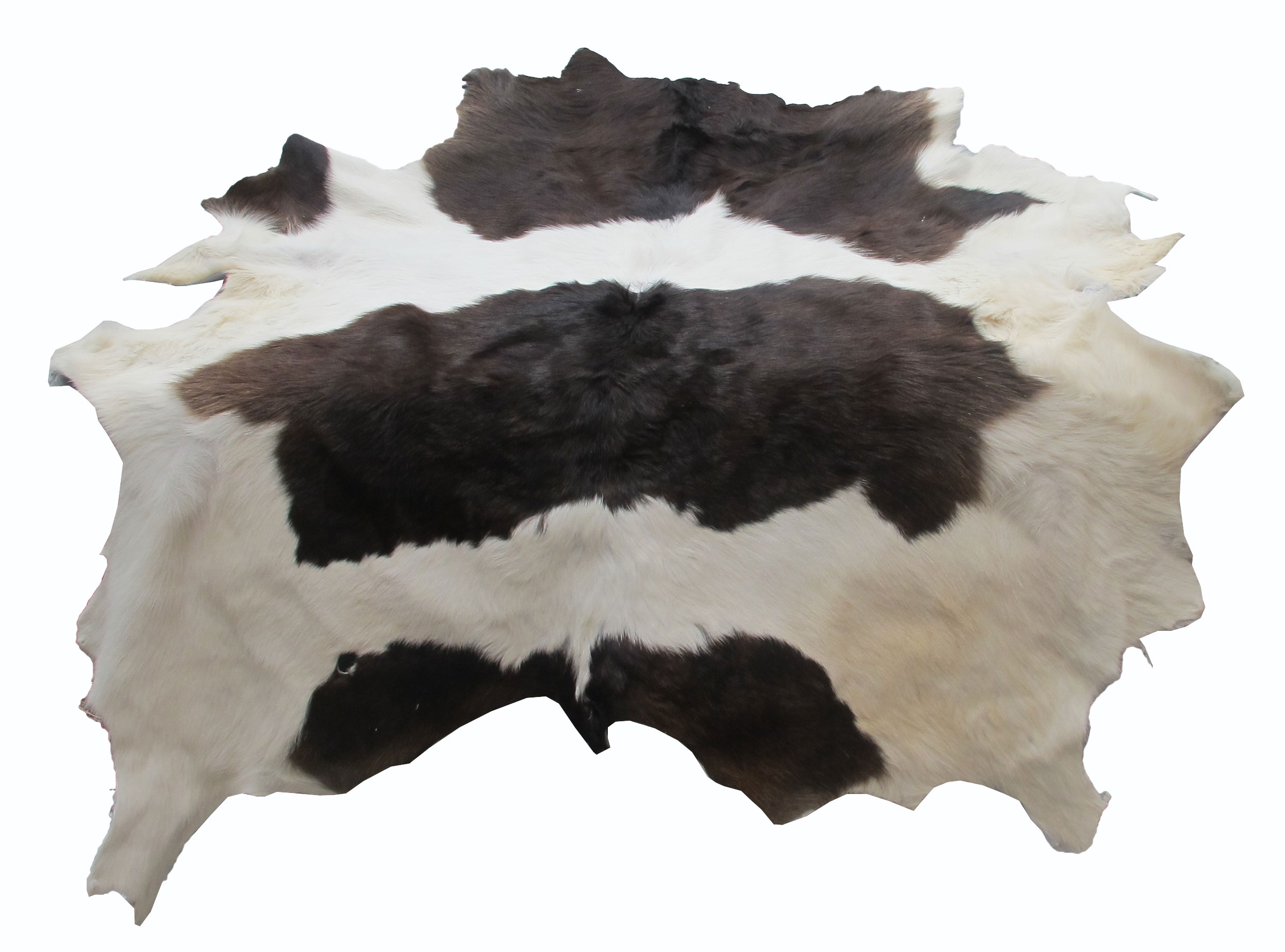 หนังแท้ หนังขนลูกวัว ใช้สำหรับตกแต่งฝาผนังบ้าน หรือ ใช้เป็นผ้าปูโต๊ะแล้วเอากระจกทับ หรือ ผ้าคลุ่มเก้าอี้นั่ง สำเนา สำเนา สำเนา สำเนา สำเนา